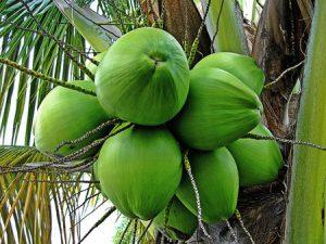 नारियल के फायदे : सेहत और सुंदरता के लिए