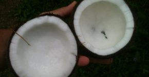 नारियल तेल के फायदे - Coconut oil health benefits in hindi