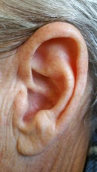 ear36_1482.jpg