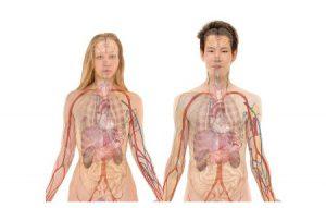 लीवर कैंसर के लक्षण और इलाज
