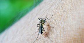 डेंगू के लक्षण और उपचार - Dengue Symptoms and home remedies in hindi