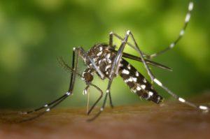 डेंगू से बचने के 6 घरेलू नुस्खे