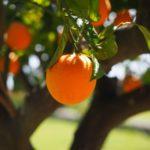 पेट के रोगों का इलाज – खाएं ये 4 फल