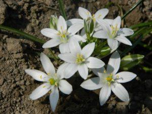 मानसिक तनाव से मुक्ति के उपाय – फूलों के रस