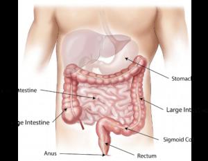 आंत क्या है, आंत के कार्य और इसके रोग