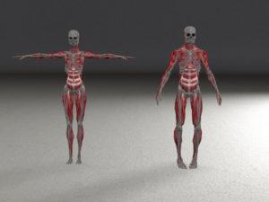 हड्डियों के रोग और सरंचना