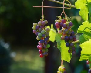 कब्ज दूर करने के उपाय – खाएं ये फल और सब्जियां