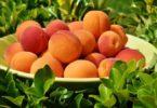 जाने आडू खाने के फायदे सेहत, हड्डियों, इम्यून सिस्टम और पेट की समस्या के लिए, aadu or peach health benefits in hindi and right time to eat it.