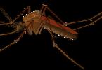 जानें डेंगू में परहेज के बारे में जैसे की डेंगू में क्या खाएं, क्या नहीं खाएं और कैसे करें देखभाल, dengue mein parhej what to eat and what not to in hindi.