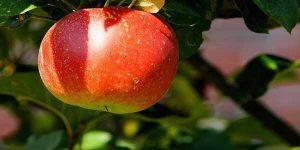 पेट साफ करने के लिए खाएं ये फल – बचें कई बिमारियों से