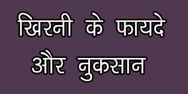 खिरनी के फायदे और नुकसान हिंदी में आपकी सेहत के लिए क्यूंकि इसमें विटामिन आदि होते हैं, jane khirni ke fayde aur nuksan in hindi.