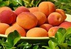 खुबानी फल के फायदे और नुकसान जाने आपकी सेहत, त्वचा, हडियों के लिए, khubani fal ke fayde nuksan apki sehat ke liye hindi me