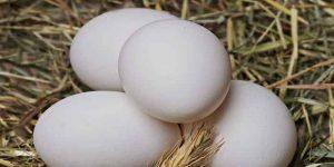 खूबसूरत त्वचा के लिए अंडे के छिलके के फायदे