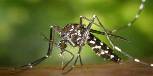 बच्चों को मलेरिया होने पर क्या करे