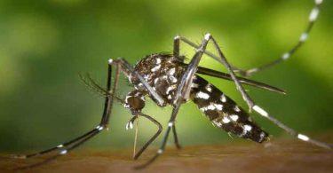 आइये जाने बच्चों को मलेरिया होने पर क्या करे और क्या न करें क्यूंकि बच्चों की मलेरिया में सही देखभाल करना बहुत जरुरी है, bachon ko malaria hone par kya karen