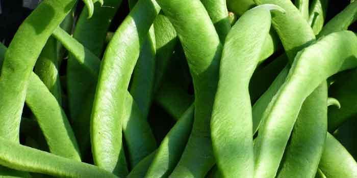 सेम की फली की सब्जी आपने खाई होगी और यह स्वास्थ्य के लिए बहुत ही फायदेमंद होती है, अब आइए सेम की फली के फायदे जानते हैं, Benefit of green beans.