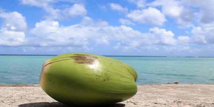 मिर्गी का उपचार है नारियल पानी