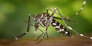 बच्चों में डेंगू बुखार के लक्षण और बचाव