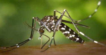 बच्चों में डेंगू के लक्षण और बचाव