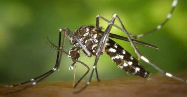मलेरिया से बचाव के उपाय