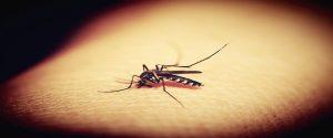डेंगू से बचने के 6 उपाय हैं आपके किचन में
