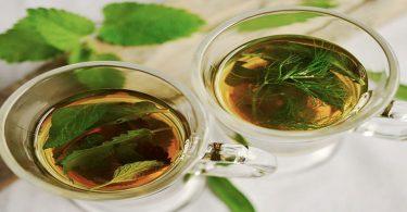नेटल टी के फायदे - Nettle tea benefits in hindi