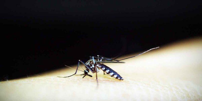 मलेरिया होने पर क्या करे