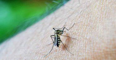 मलेरिया के घरेलू उपचार में अपनाएं ये आसान उपाय
