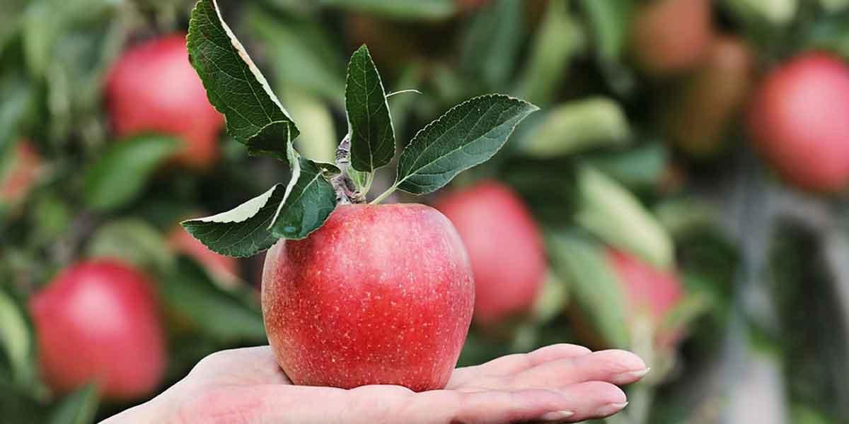 खाली पेट फल का सेवन