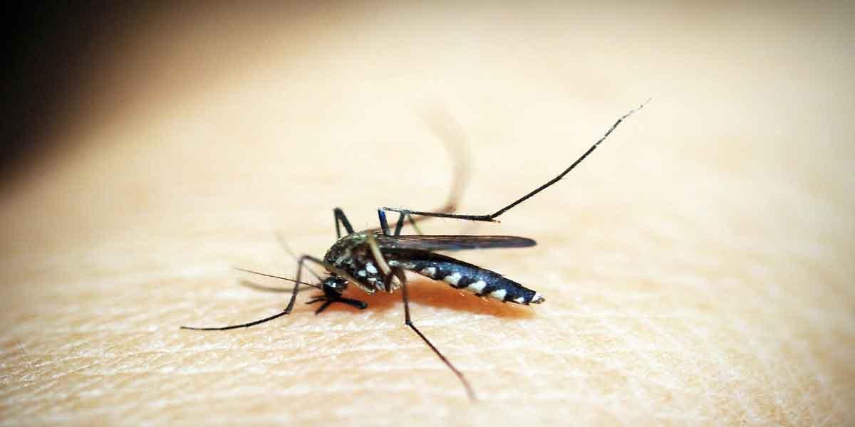डेंगू बुखार कब होता है गंभीर
