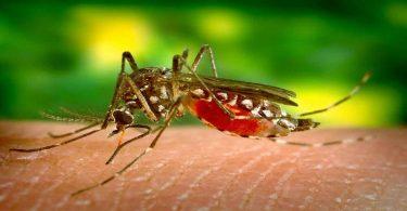 डेंगू के लक्षण क्या है, इससे बचाव के उपाय