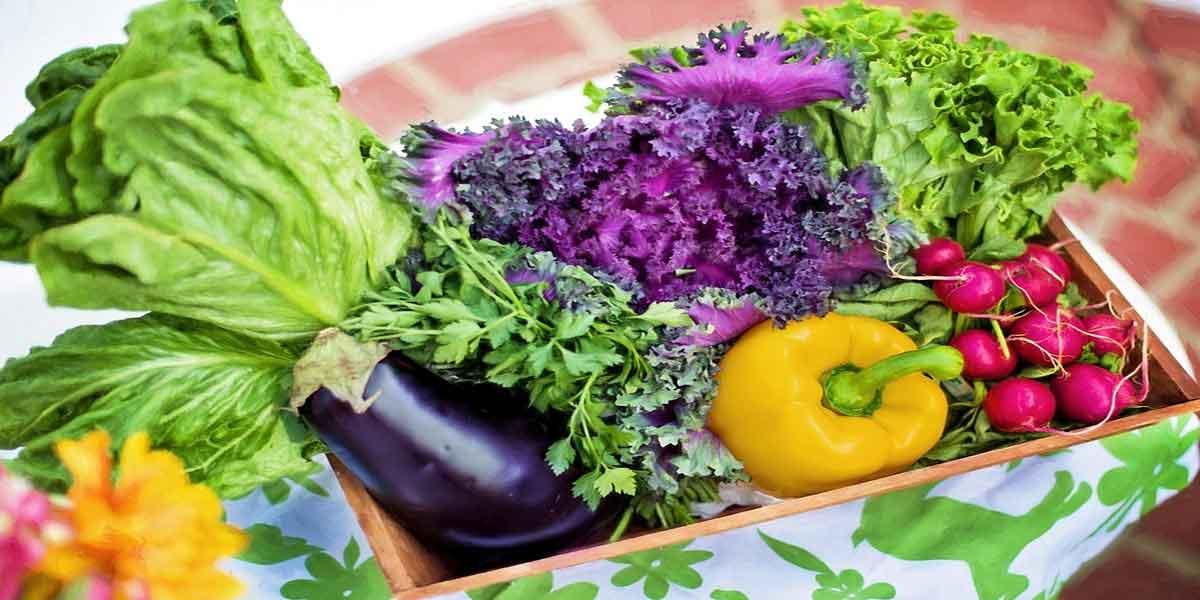 विटामिन और मिनरल्स से भरपूर आहार का सेवन