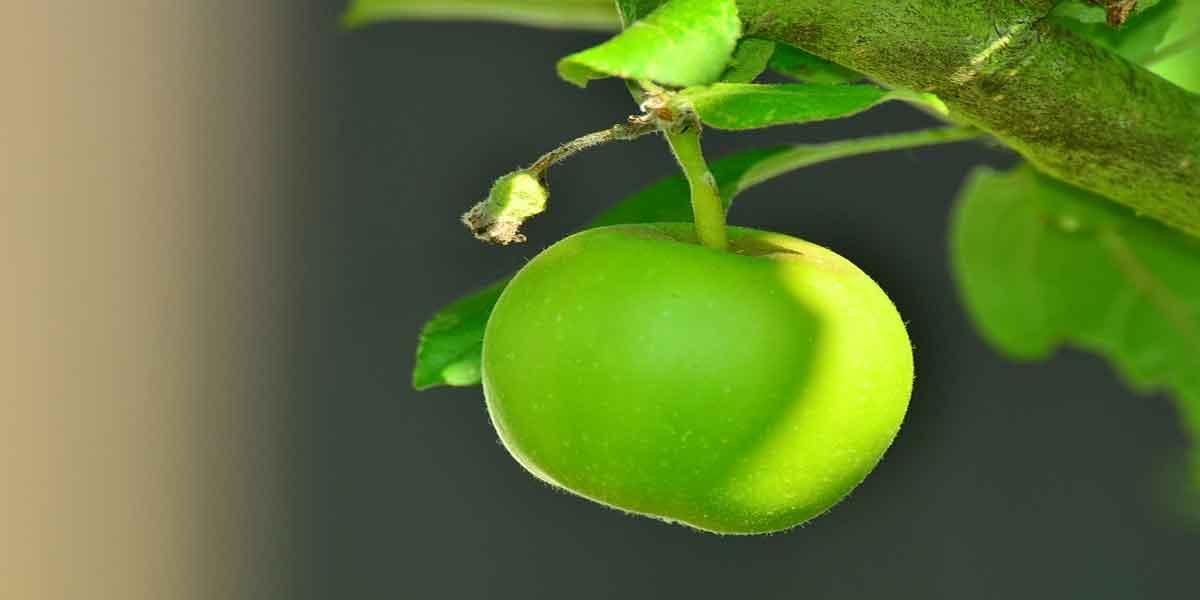 हरा सेब