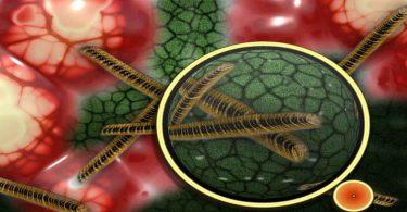 हीमोग्लोबिन की कमी से क्या होता है
